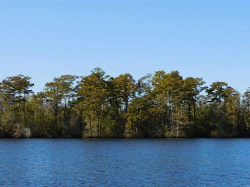 Pasquotank River Hunting Land : Elizabeth City : Pasquotank County : North Carolina