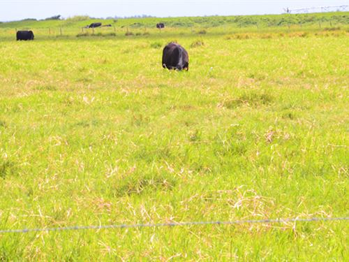 Highly Productive Pasture in Hardee : Zolfo Springs : Hardee County : Florida
