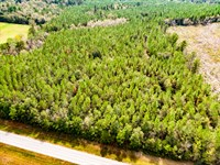 Awesome Timber Investment : Westville : Holmes County : Florida