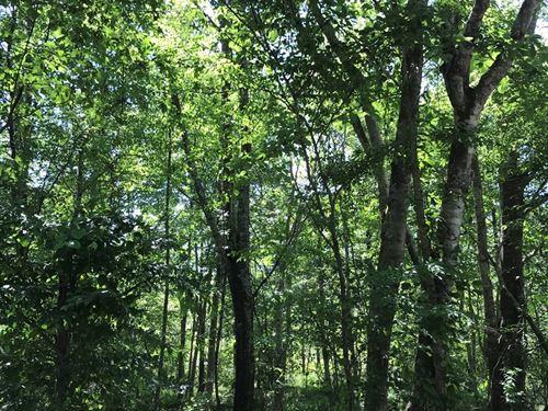 Land, Murff Rd, Aberdeen, Ms, 21 : Aberdeen : Monroe County : Mississippi
