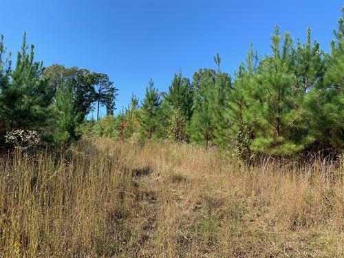 Allen Property 213 Acres : Montgomery : Alabama