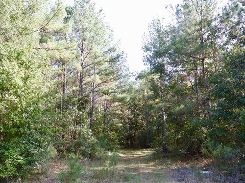 Pine Timber & Hardwoods : Cairo : Grady County : Georgia