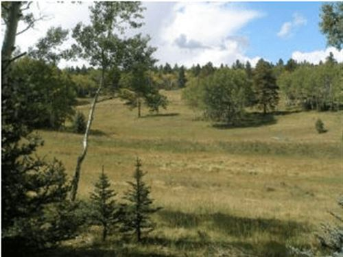 Large Forbes Park Land Sale : Fort Garland : Costilla County : Colorado