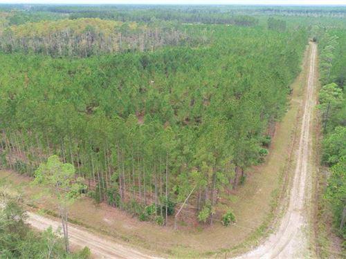 37+ Acres Land For Sale Camden Cou : White Oak : Camden County : Georgia