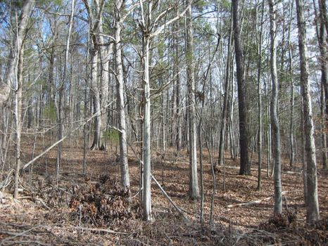 Incredible Propety on 1.681 Acres : Pittsboro : Chatham County : North Carolina