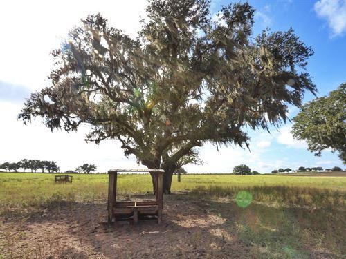 Horse Farm Or Ranch Near Ocala FL : Dunnellon : Marion County : Florida