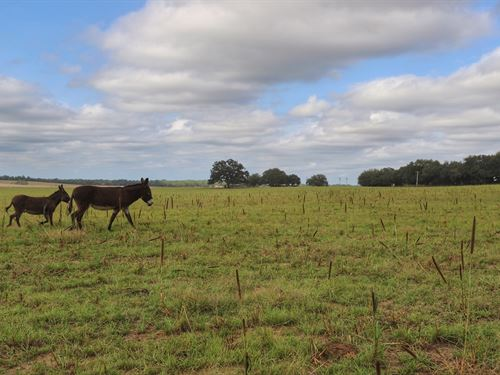 Horse/Cattle Farm Located 15 Miles : Dunnellon : Marion County : Florida