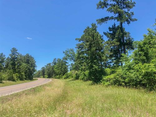 36 Acres Fm 356 Tract 2206 : Trinity : Texas
