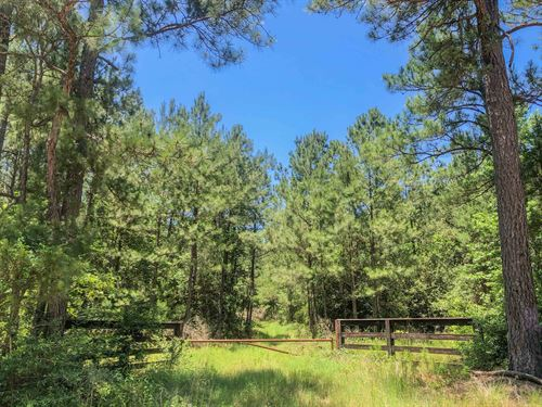 54 Acres Fm 356 Tract 2206 : Trinity : Texas