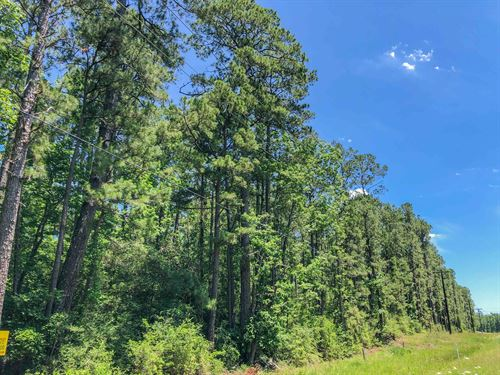 158 Acres Fm 356 Tract 2206 : Trinity : Texas