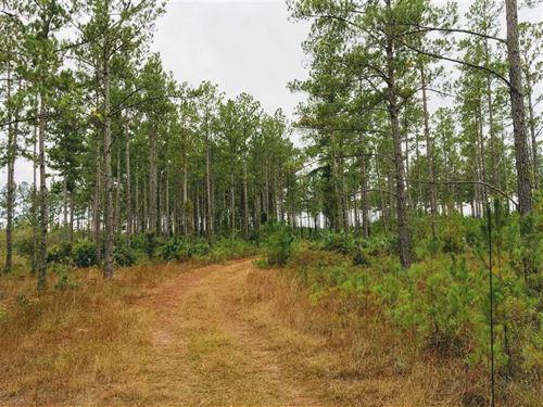 9.85 Acres Land For Sale Camden CO : White Oak : Camden County : Georgia