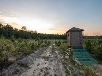 Hunting & Timber Tract : Rockingham : Richmond County : North Carolina