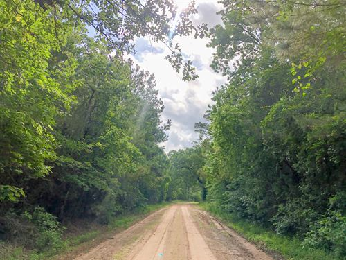 529 Acres Cr 4545 Tract 1198 : Kennard : Houston County : Texas