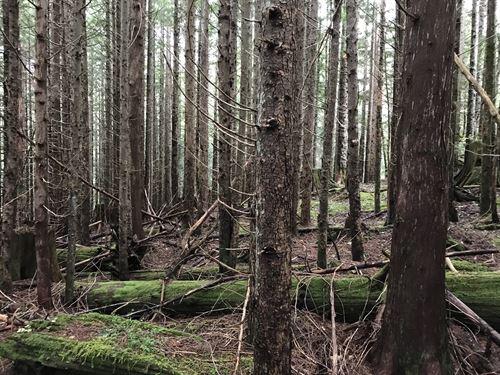 Cumberland Creek : Hamilton : Skagit County : Washington