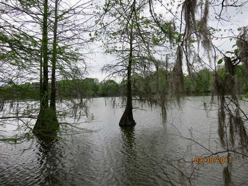 166 Acres of Fine Tensas Parish Hu : Waterproof : Tensas Parish : Louisiana