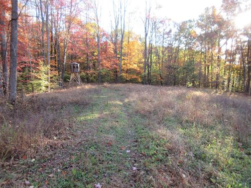 160 Wooded Acres Scenic Muskingum : Blue Rock : Muskingum County : Ohio