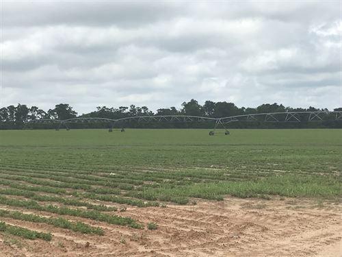Rushton Farm : Millen : Jenkins County : Georgia
