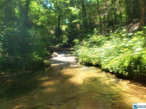 Burton Loop Recreational Hunting : Altoona : Etowah County : Alabama
