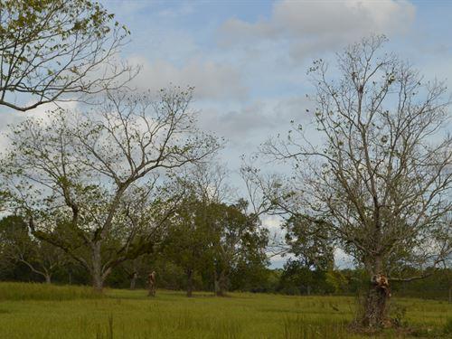 Willis Farm : Paxton : Walton County : Florida