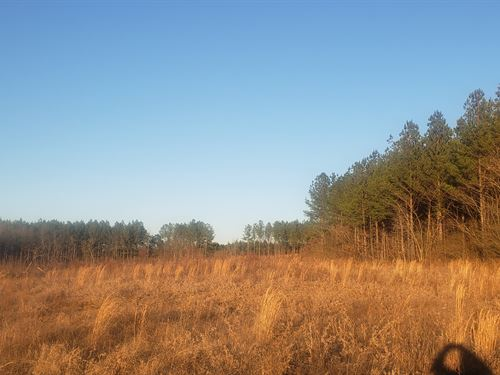 Redman Hall Rd Res / Rec Hunting : Pinson : Jefferson County : Alabama
