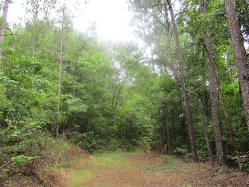 45.86 Acres in Camden, AL : Camden : Dallas County : Alabama