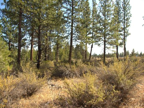 Wooded Corner Lot, $125/Month : Chiloquin : Klamath County : Oregon