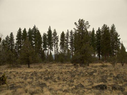 Private Corner Lot, $125/Month : Chiloquin : Klamath County : Oregon