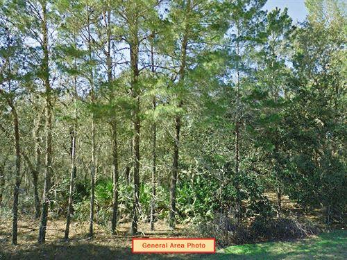 .23 Acre Lot Near Interlachen : Interlachen : Putnam County : Florida
