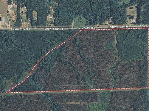 100 Acres in Opelika, AL : Opelika : Lee County : Alabama