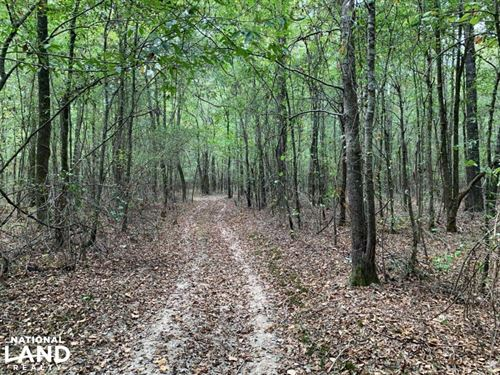 Hunting And Recreational Timberland : Macon : Noxubee County : Mississippi
