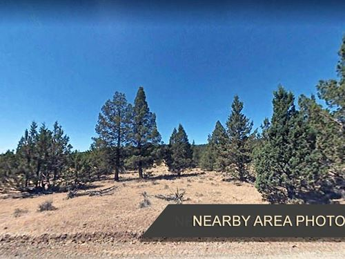 Raw Land, 1.5 Acres for $109/Month : Alturas : Modoc County : California