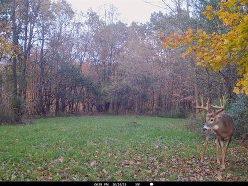 Big Buck Hunting Land Crawford : Gays Mills : Crawford County : Wisconsin
