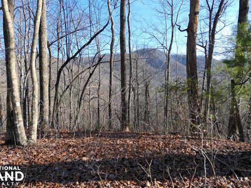 Large Acreage Woodland With Streams : Black Mountain : Buncombe County : North Carolina