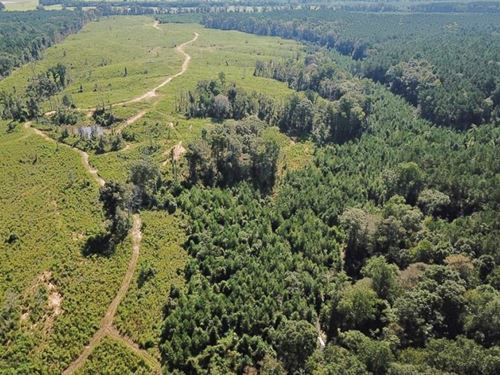 Hunting Timber Land For Sale Wilkin : Centreville : Wilkinson County : Mississippi