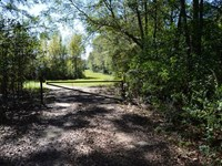 213.8 Acres Hunting And Timberland : Fernwood : Pike County : Mississippi