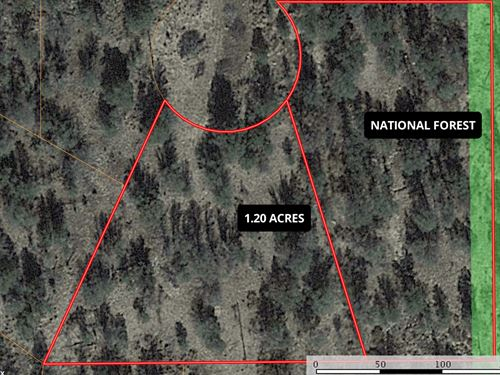 Lincoln National Forest NM Hunting : Timberon : Otero County : New Mexico
