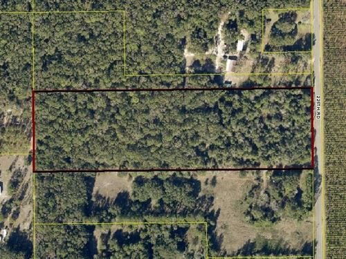 Perfect Naturally Wooded Perfect : Live Oak : Suwannee County : Florida
