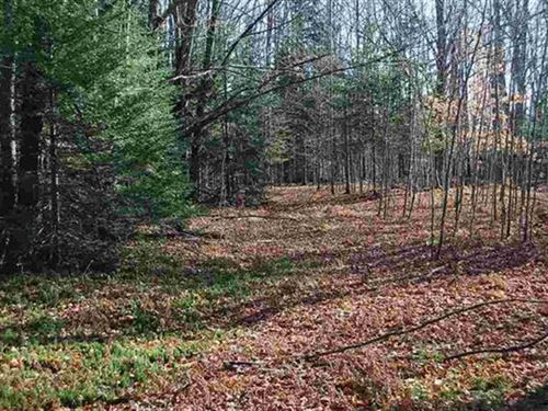 Wooded 240 Acres 1118566 : Manistique : Schoolcraft County : Michigan