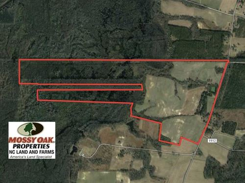 350 Acres of Farm And Hunting Land : Hallsboro : Columbus County : North Carolina