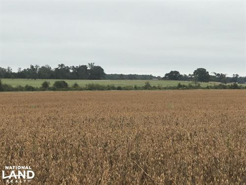Buena Vista Farm & Ranch : Okolona : Chickasaw County : Mississippi