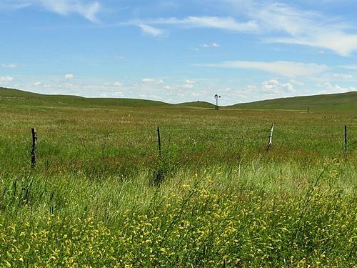 Nebraska Sandhills Cattle & Elk : Whitman : Cherry County : Nebraska