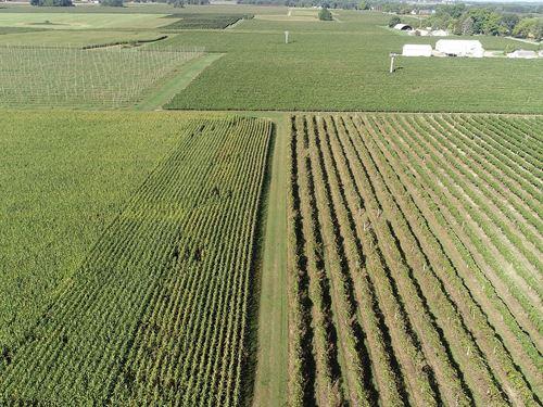 Land Auction In Michigan : Paw Paw : Van Buren County : Michigan