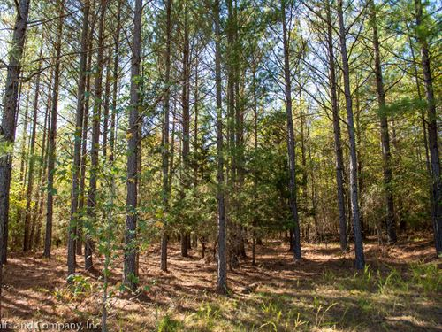 66.20 Acres Pauline, West Springs : Pauline : Spartanburg County : South Carolina