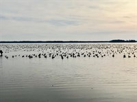 Premier Hyde Co, NC Hunting Prop : Fairfield : Hyde County : North Carolina