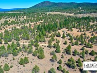 Off Grid Privacy Only $129 /Month : Beatty : Klamath County : Oregon