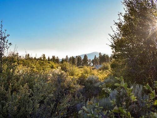 Enjoy Peace & Quiet Among The Trees : Chiloquin : Klamath County : Oregon