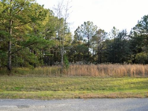 Nice Half Acre Lot : Live Oak : Suwannee County : Florida