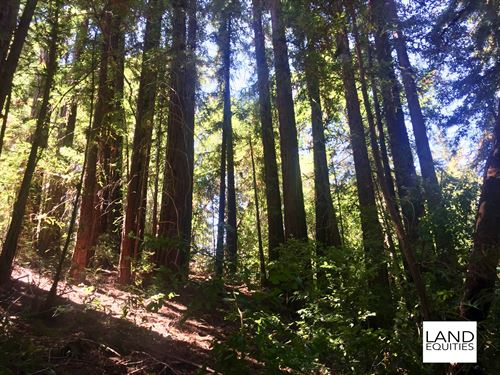 Escape To The Redwoods $129 /Mo : Felton : Santa Cruz County : California