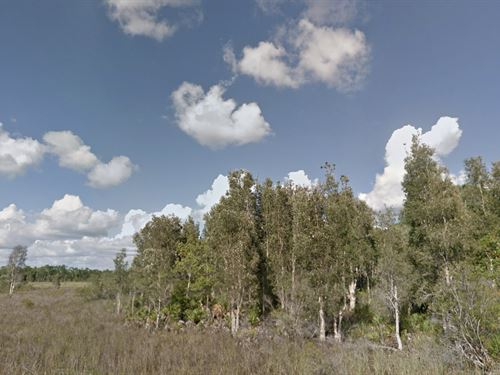 2.5 Acres For Investment or Hunting : Punta Gorda : Charlotte County : Florida