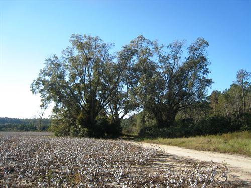 Brooklet Denmark Farm : Brooklet : Bulloch County : Georgia
